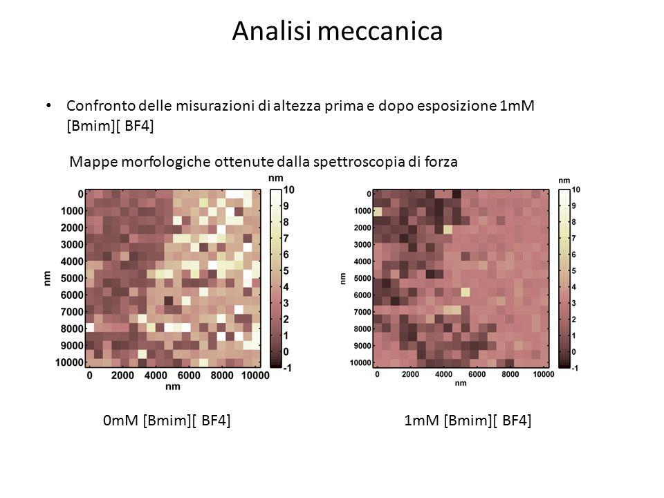 Analisi meccanica Confronto delle misurazioni di altezza prima e dopo esposizione 1mM [Bmim][ BF4]
